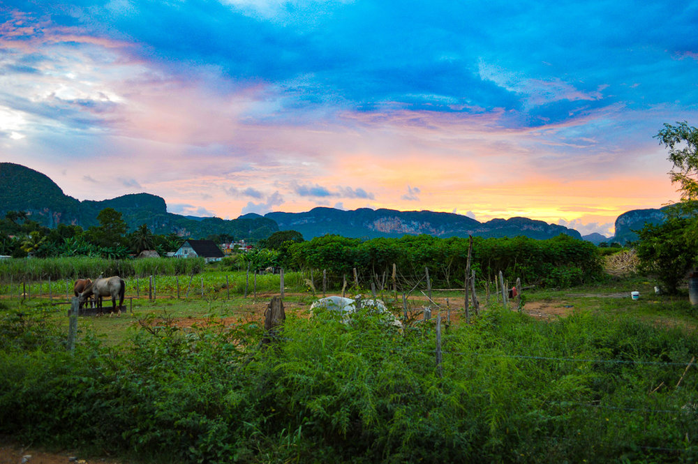orange sunset over a field with horses in Vinales, Cuba