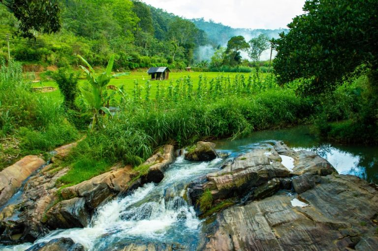 flowing river and rice fields in ella