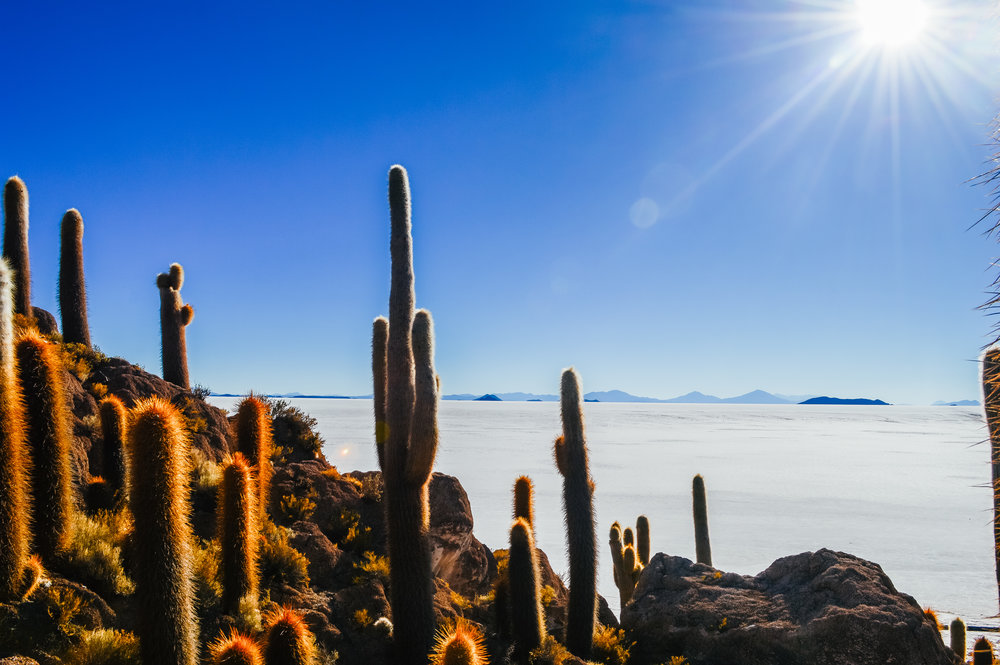 rocky cactus island with white flat salt flats in the background