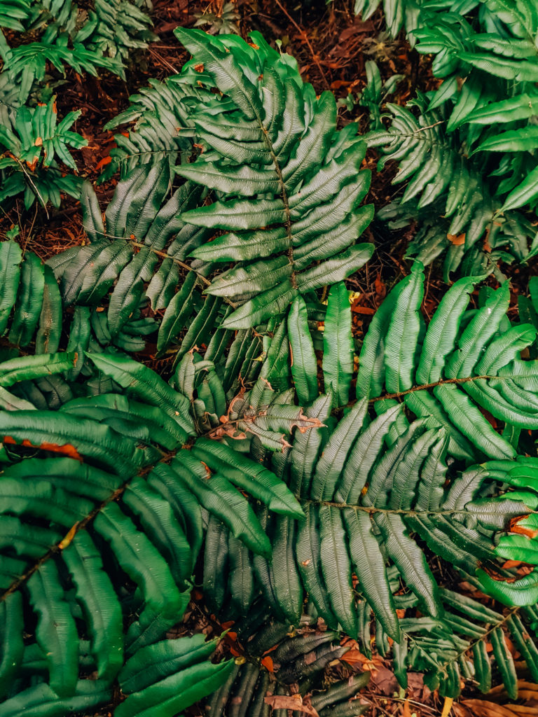 green fern leaves close up