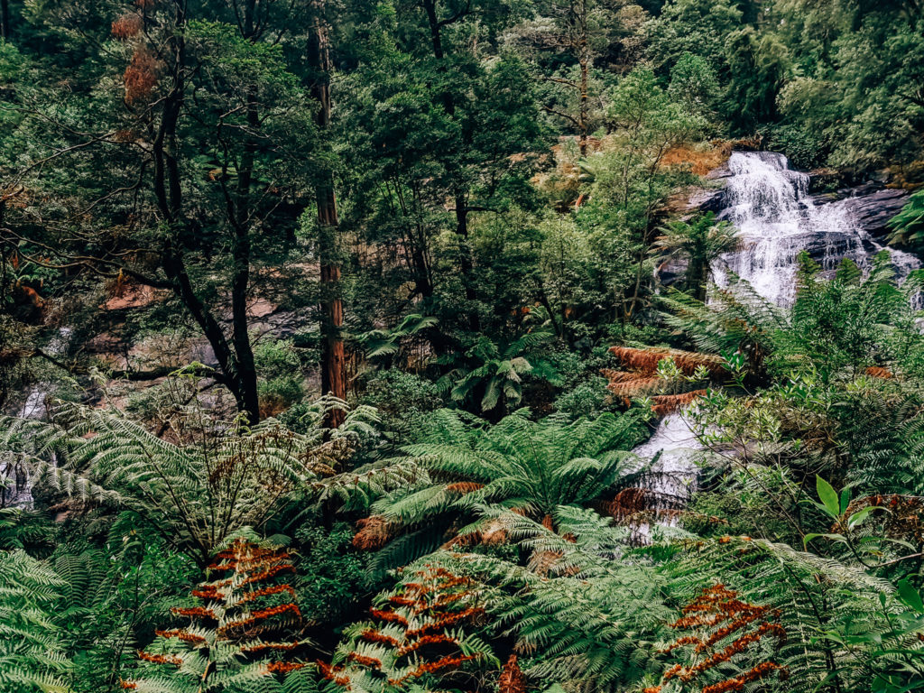 triplet falls through the trees in beech forest