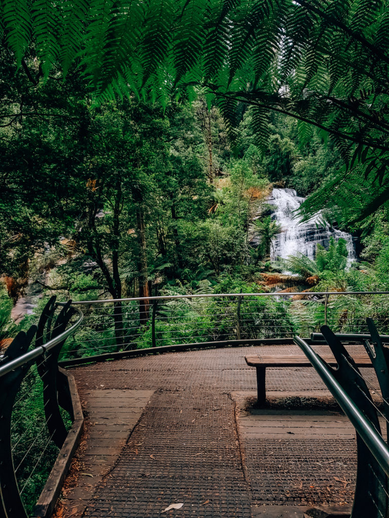 viewing platform at triplet falls in Beech Forest