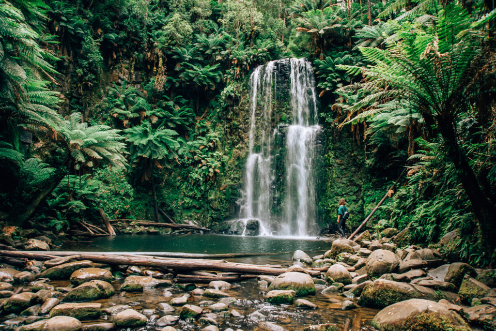 waterfall falling into pool surrounded by rainforest oasis