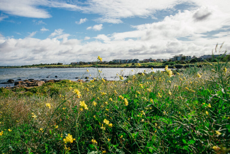 Wildflowers and sea views at a day trip to Williamstown