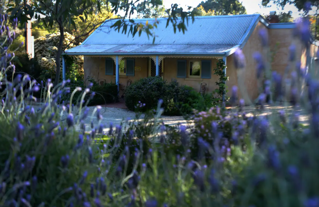 historic cottage in clare surrounded by purple flowers