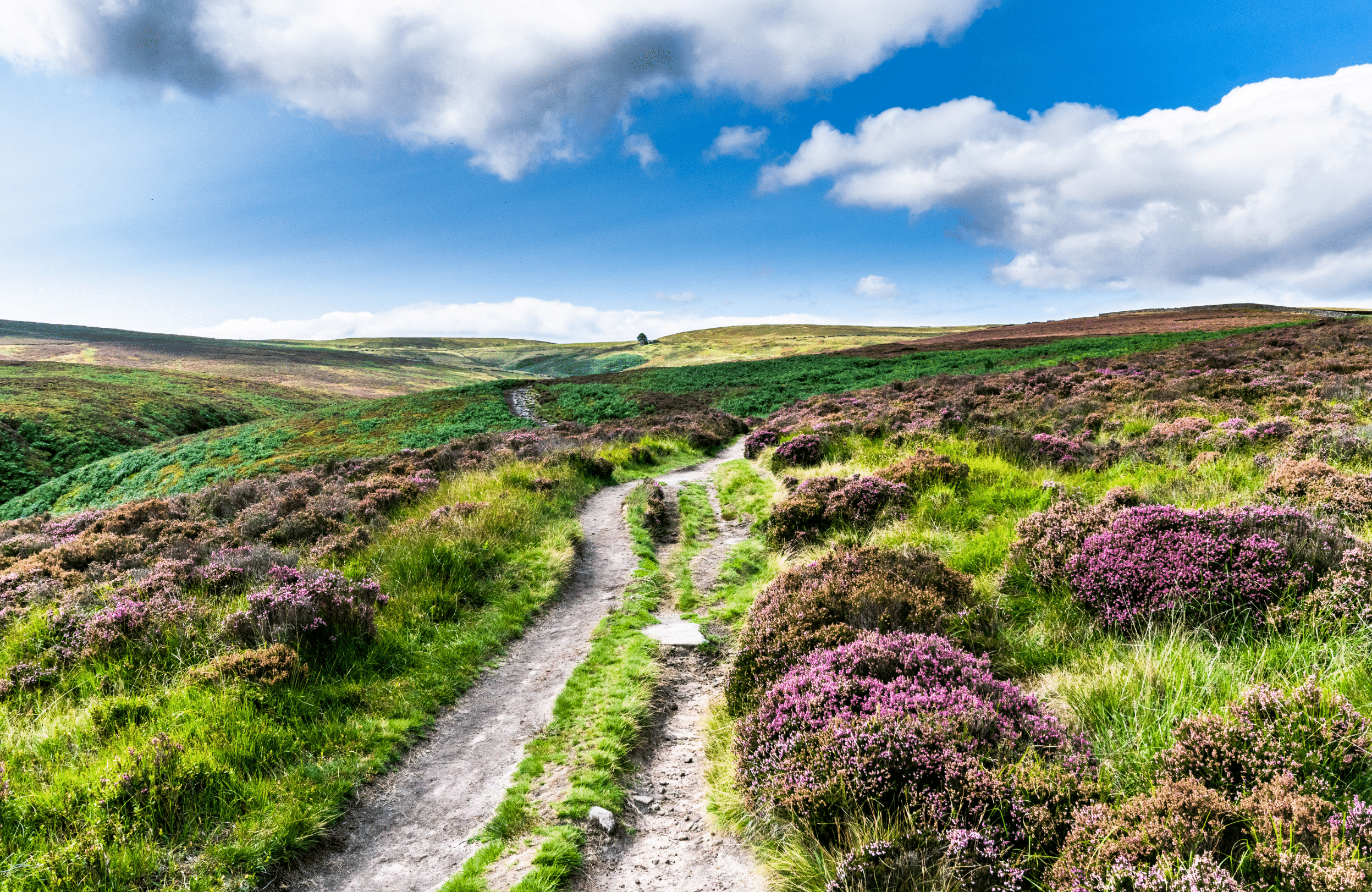 green and pink heather on west yorkshire moors