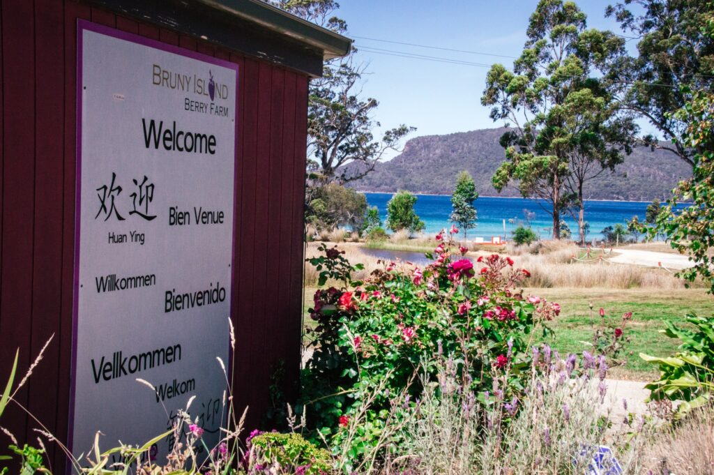 bruny island berry farm sign surrounded by flowers and blue bayin background between trees